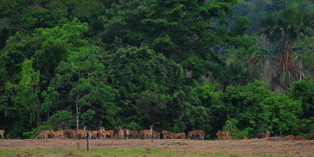 Alas Purwo Nemzeti Park