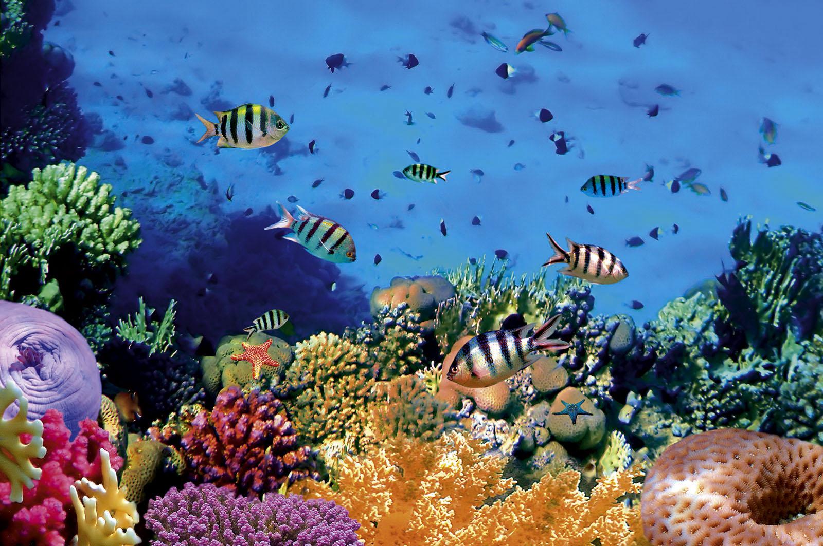Búvárkodás a korallzátonyok mentén