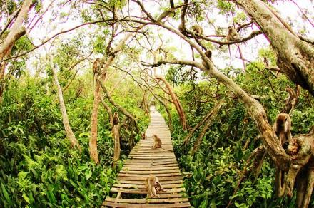 Kembang-szigeten a majmok sokasága található