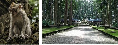 Sangeh - Majom erdő