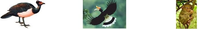 kalapácsfejű tyúk, szarvascsőrű madár és koboldmaki