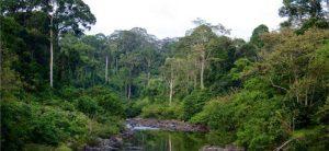Indonéz esőerdő
